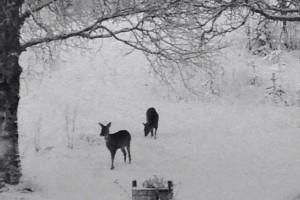 djur på besök